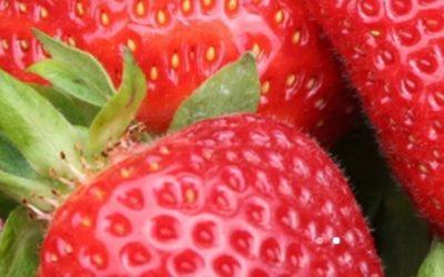 Freshuelva, la primera asociación agroalimentaria del país en alinearse con los ODS